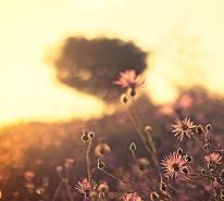 nature-field-wild-grass-thumbnail